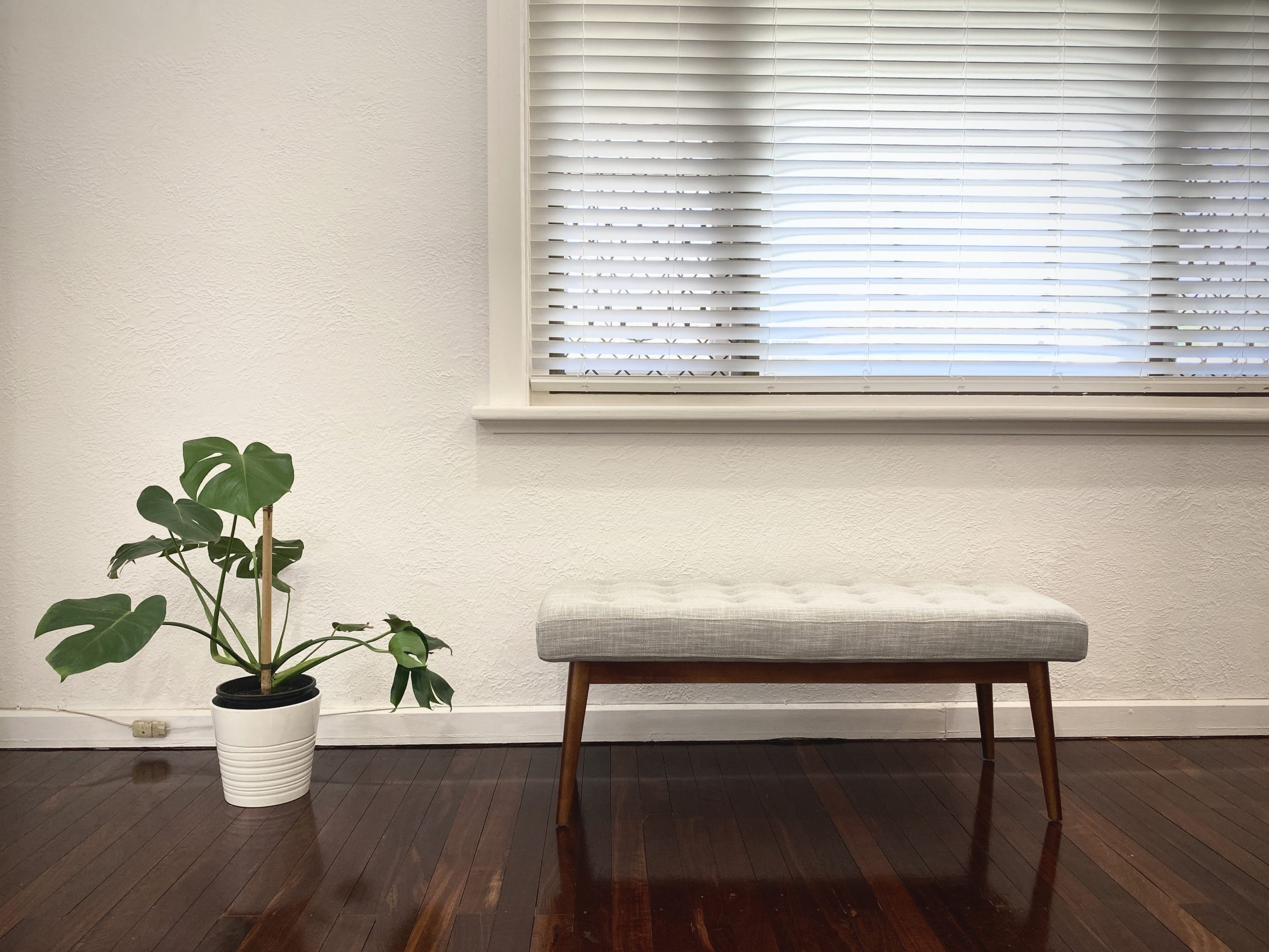 Our Monstera and West Elm bench